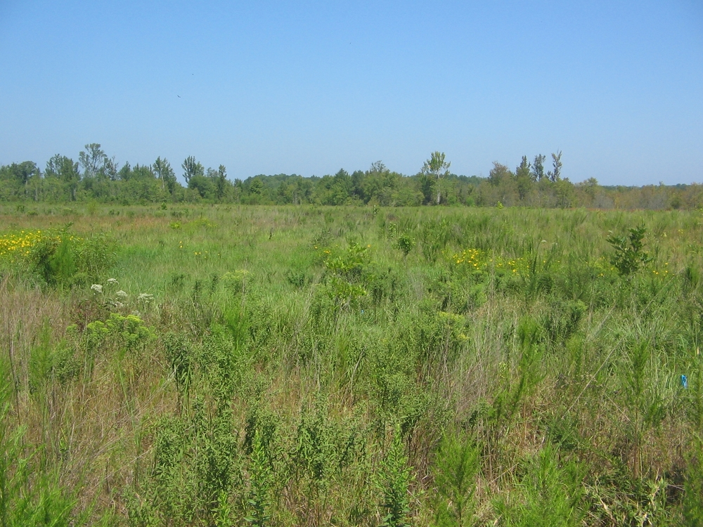 Appomattox Wetland Restoration.JPG