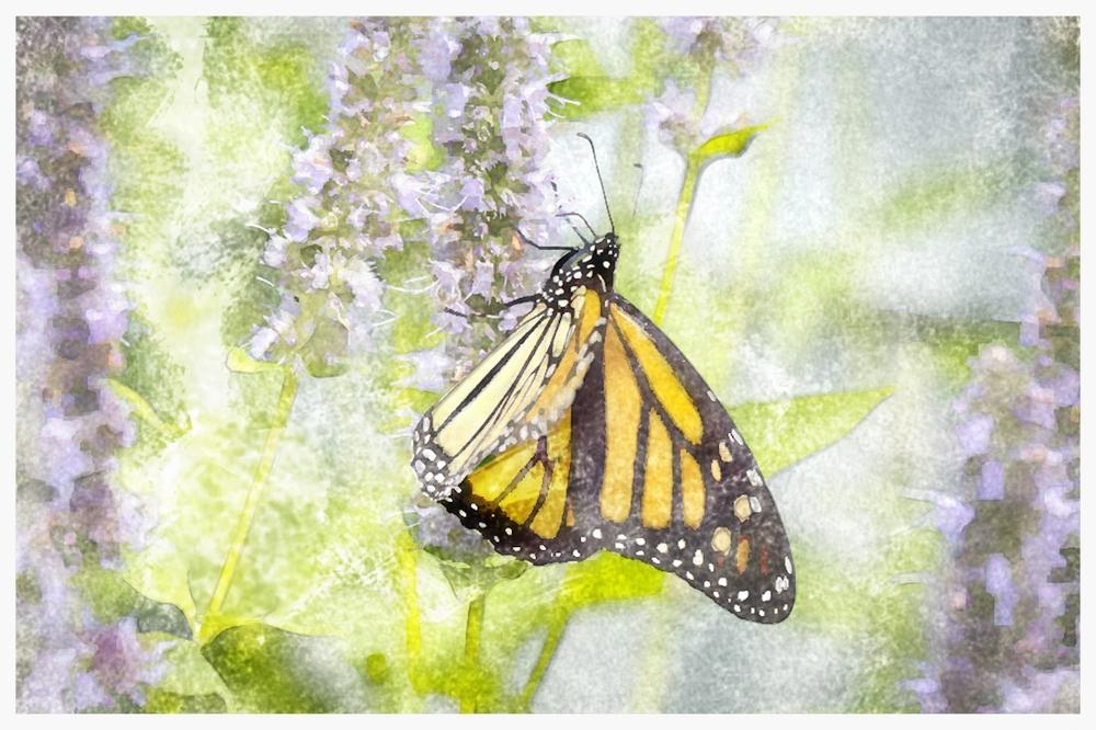 WC Butterfly-7300148.jpg