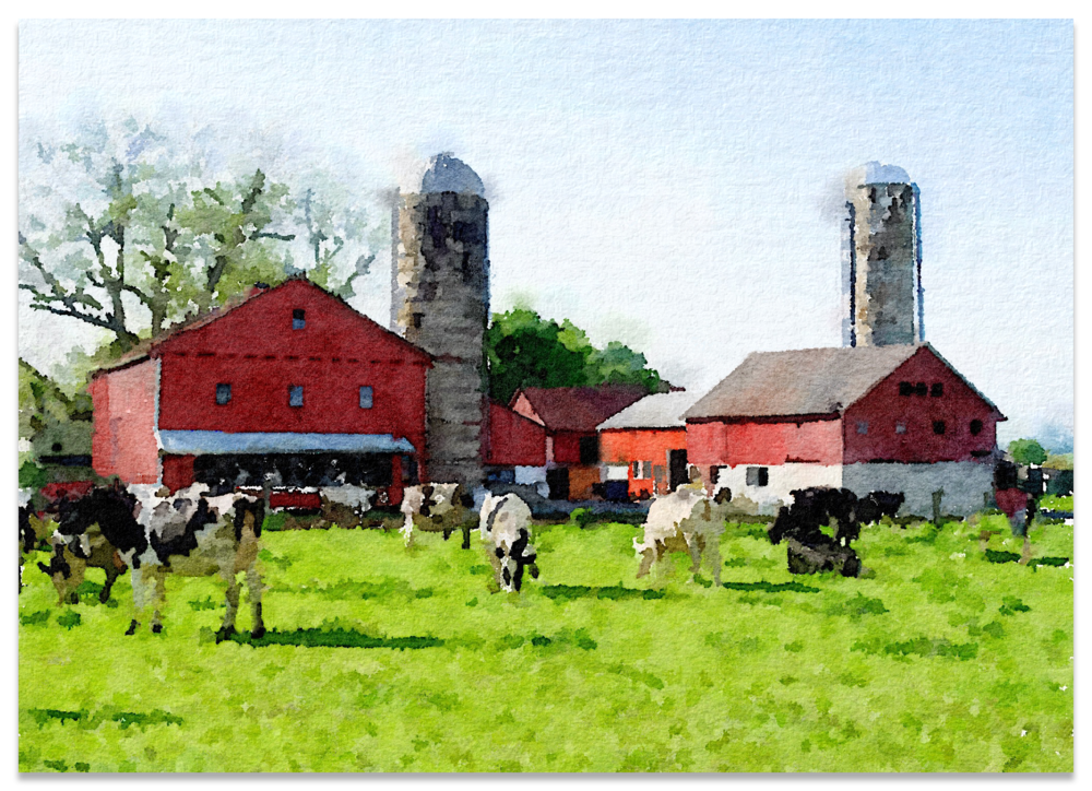 COWS AND BARN IMG_2217.png