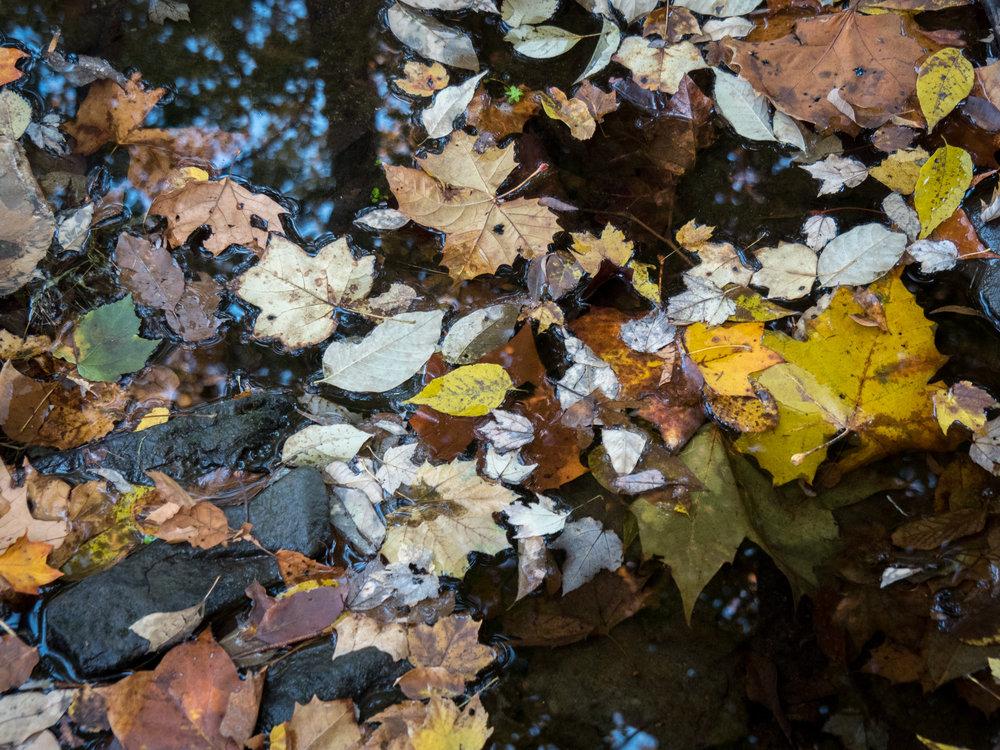 20151026-Fall Float-PA260027.jpg