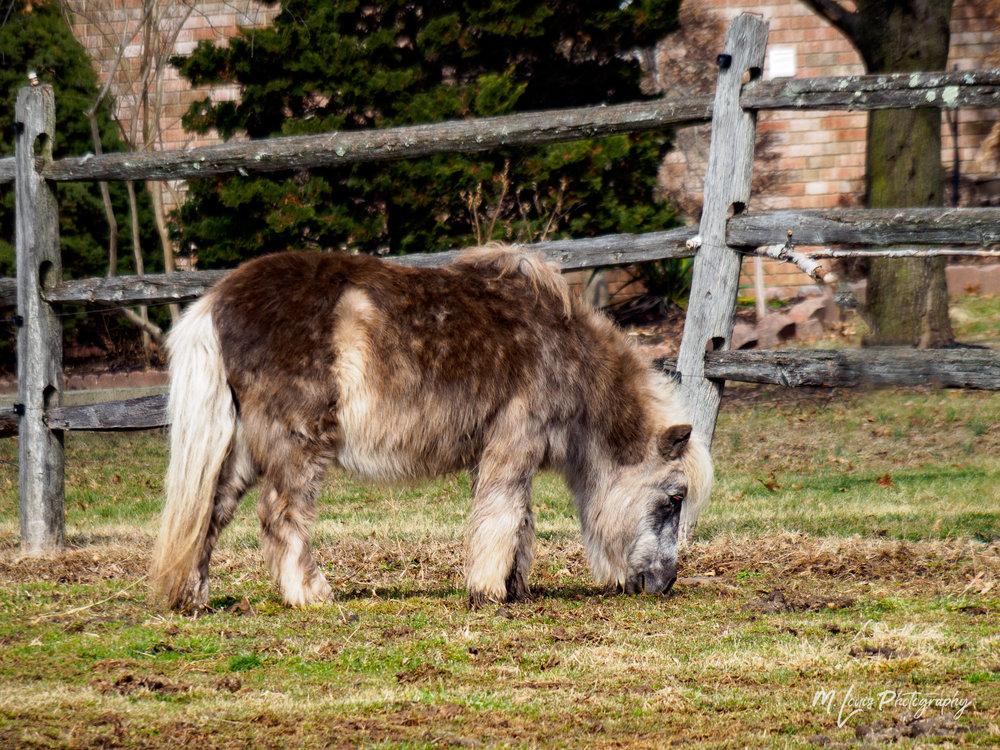 20180217 -Horse in Warwick - MLouis-2170111.jpg