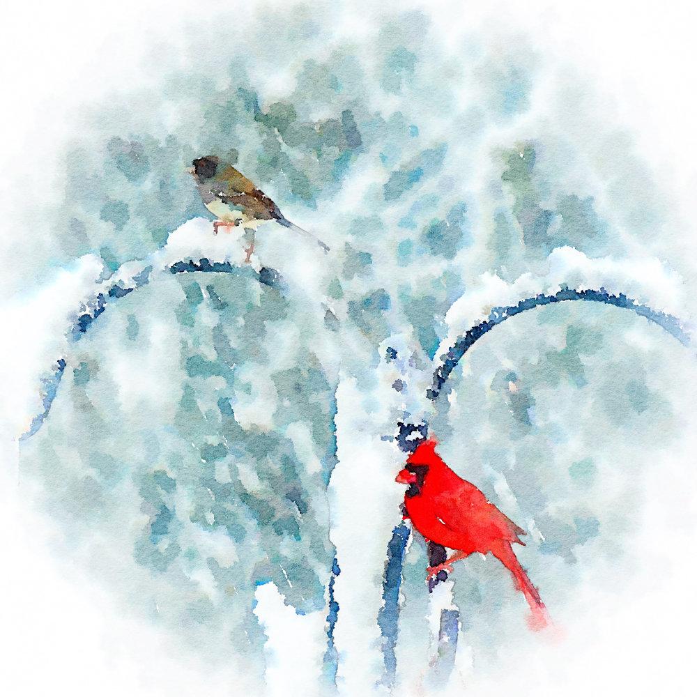 Snow Birds on Feeder IMG_0372.jpg