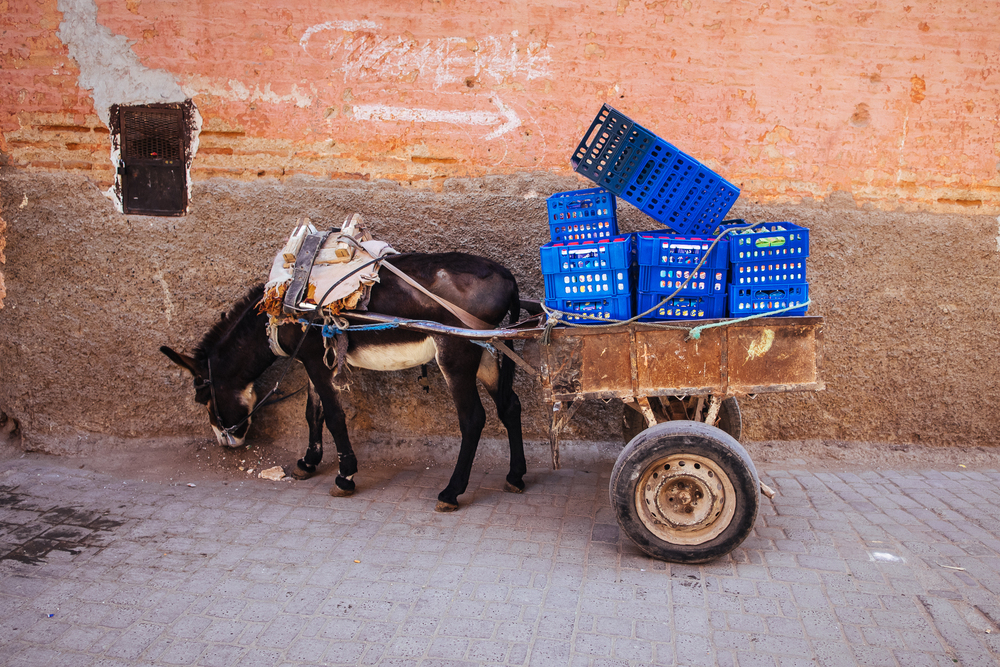 Morocco56.jpg