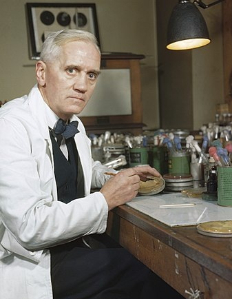 Professor Alexander Fleming in his laboratory at St Mary's, Paddington, London. (Wikimedia)