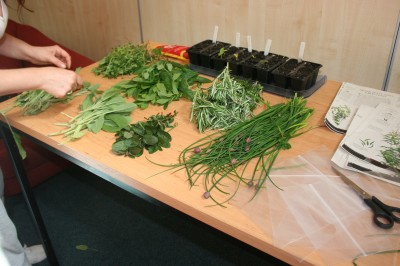 Herbs harvested at Hopetown Hostel