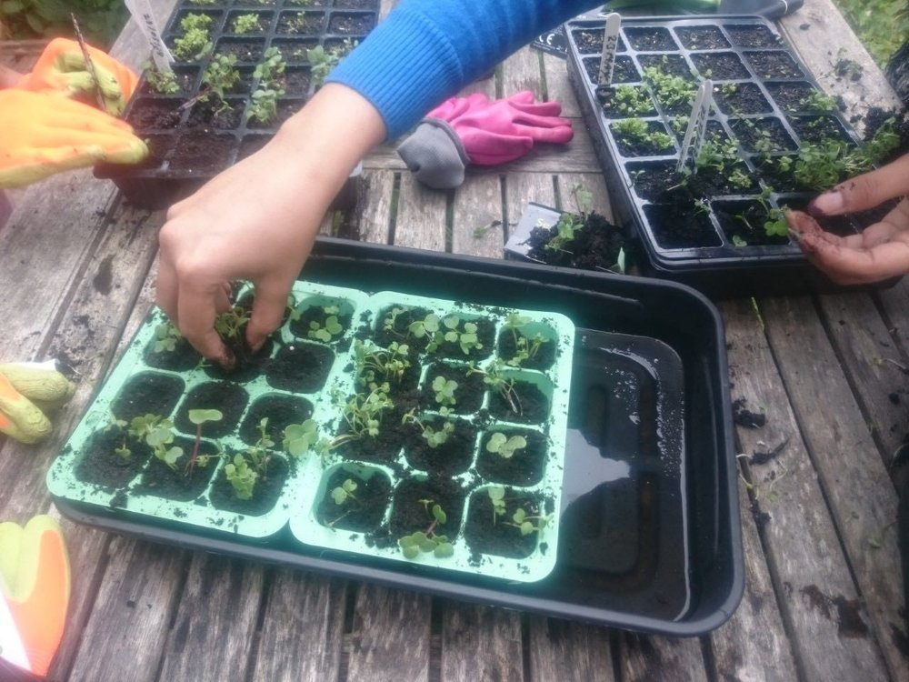 Garden Before: Garden After   Raised Beds For Growing Veg: