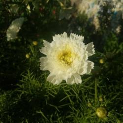 Hannah Leigh-Mackie   Soil Sisters Therapeutic Gardener