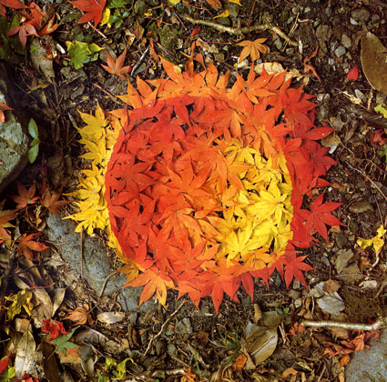 Blog-Goldsworthy-Leaf-Color.jpg