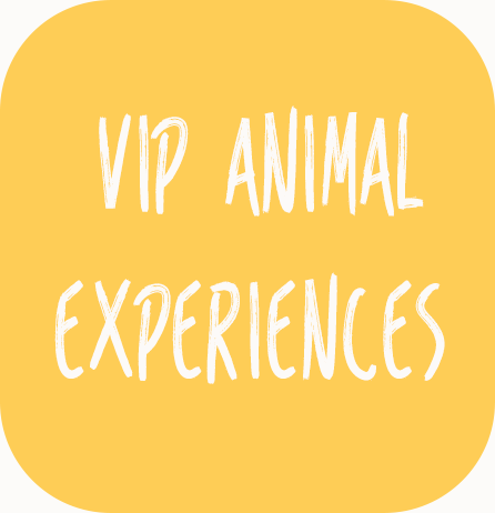 Animal Expriences