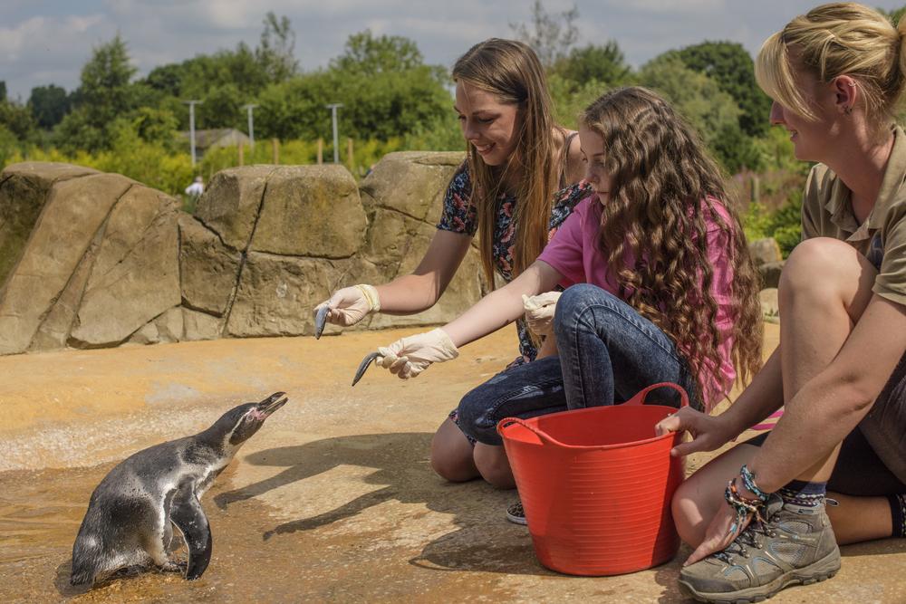 Penguin Exp_DSC2708.jpg