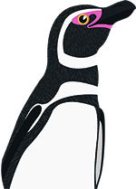 PENGUIN LARGE T.jpg