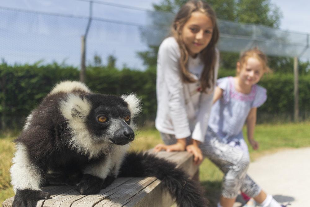 Lemur Girls_O7A3574.jpg