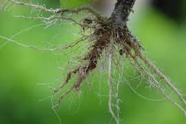 roots pic.jpeg