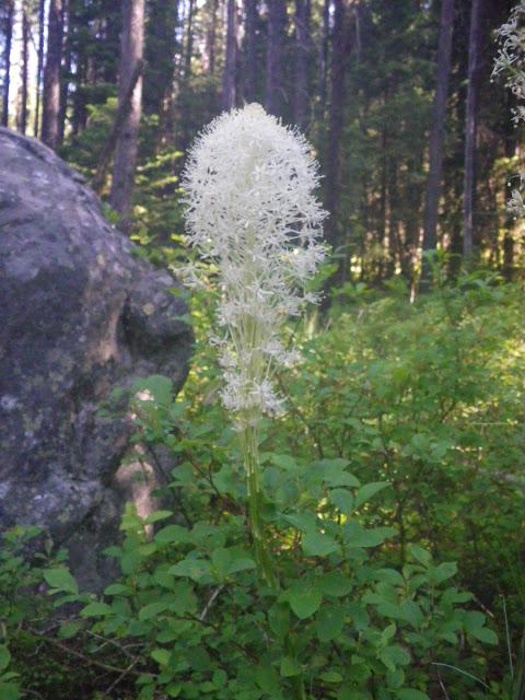 beargrass_IndidanRidge2010_BNFwestforkRD.JPG
