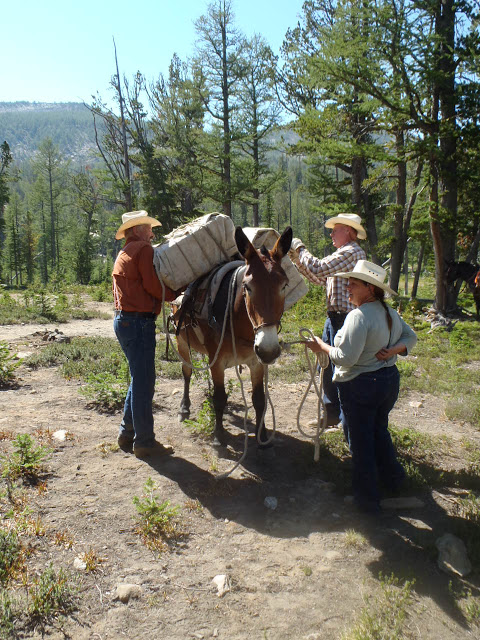 One Horse_Sierra Club volunteer mule_Kaufman.JPG