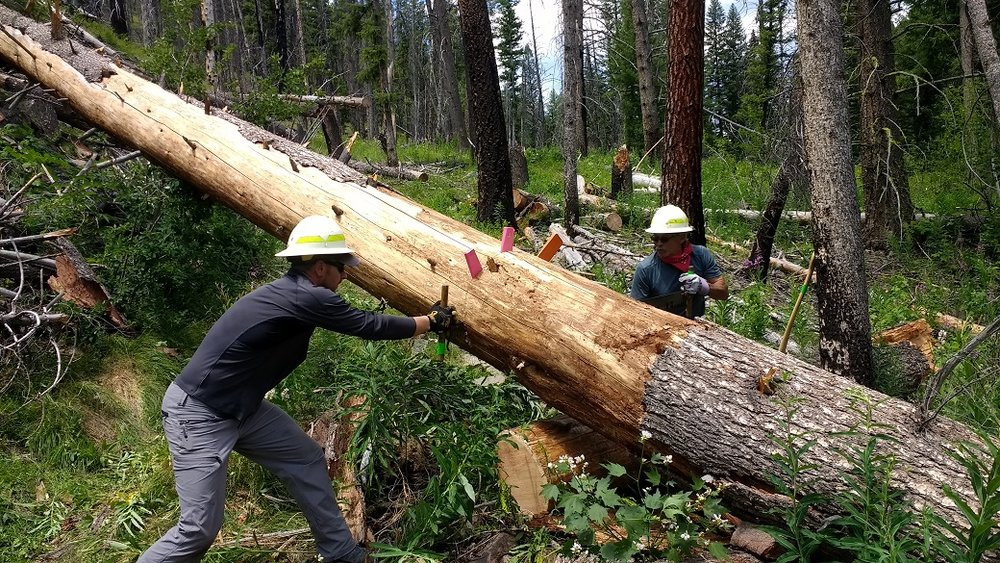 Volunteers cutting out a big log