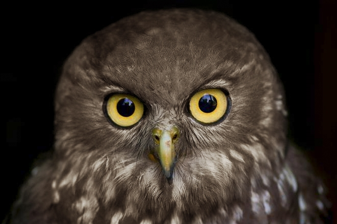 tammys-owl.jpg