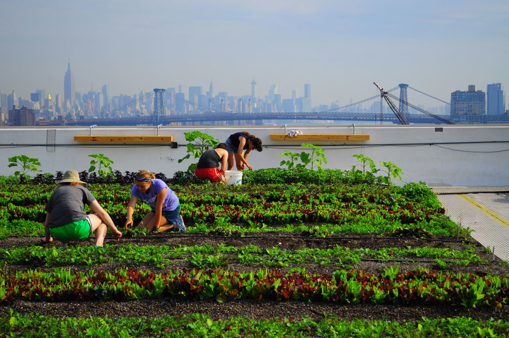 Brooklyn Grange, theLargest Rooftop Soil Farm