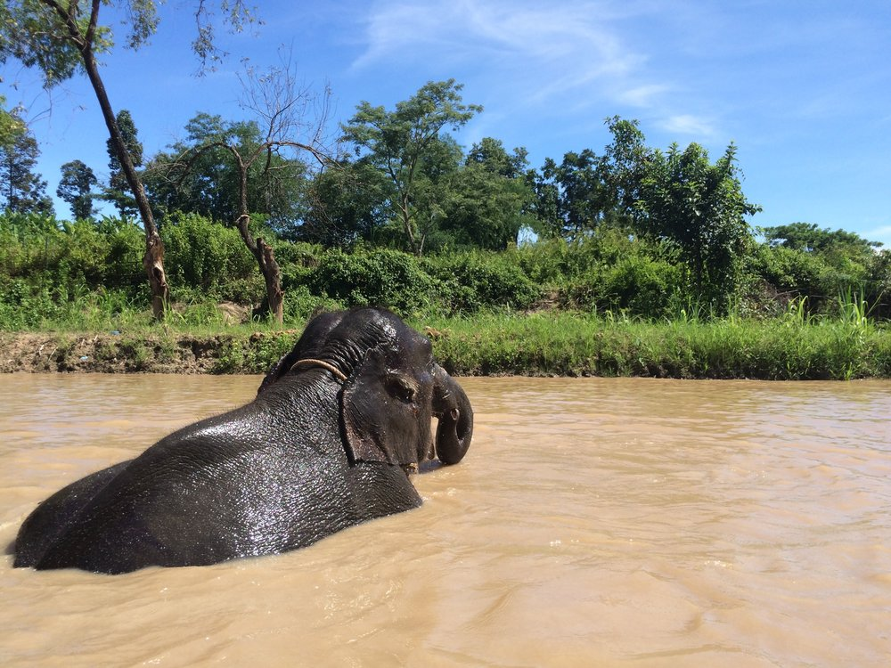 Chiang Mai, Thailand - Retired Elephant Park