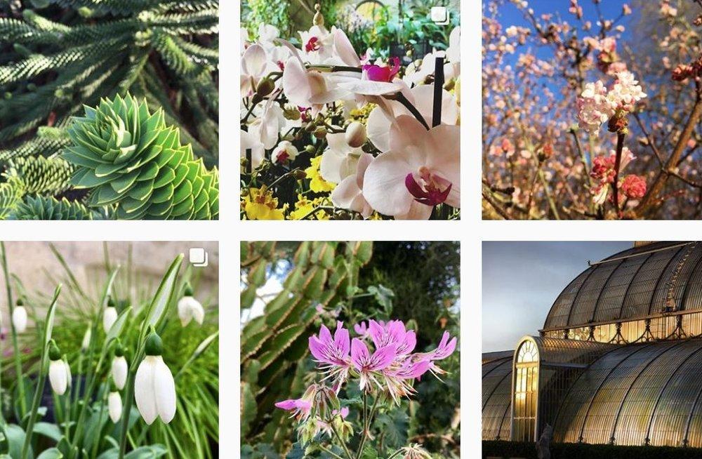 Royal Botanic Gardens Kew