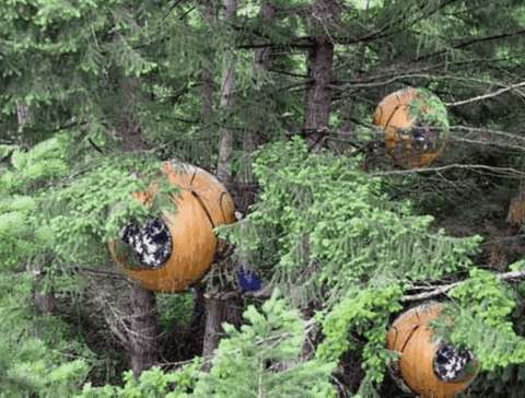 Tree Pods1.jpg