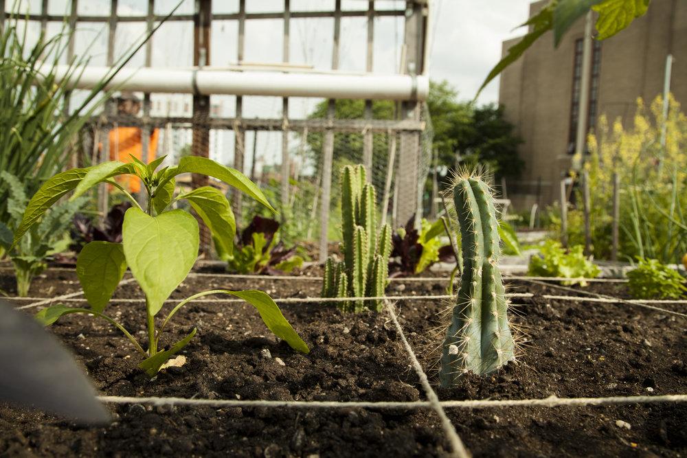 180526_Zoomed Cactus 1.jpg