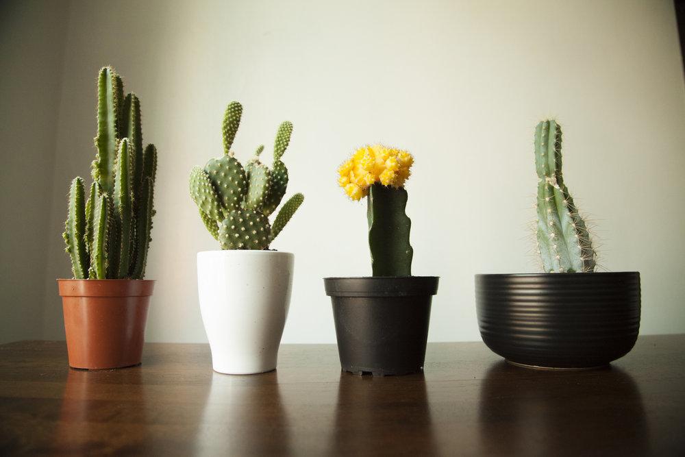 180526_Cactus 0.jpg