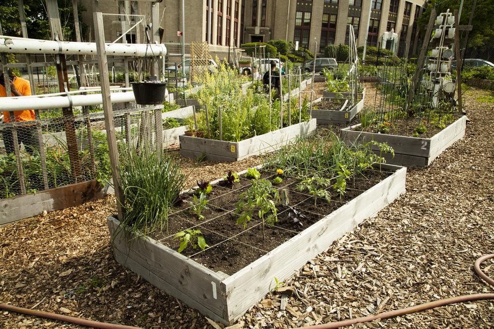 180526_Garden Bed 2.jpg