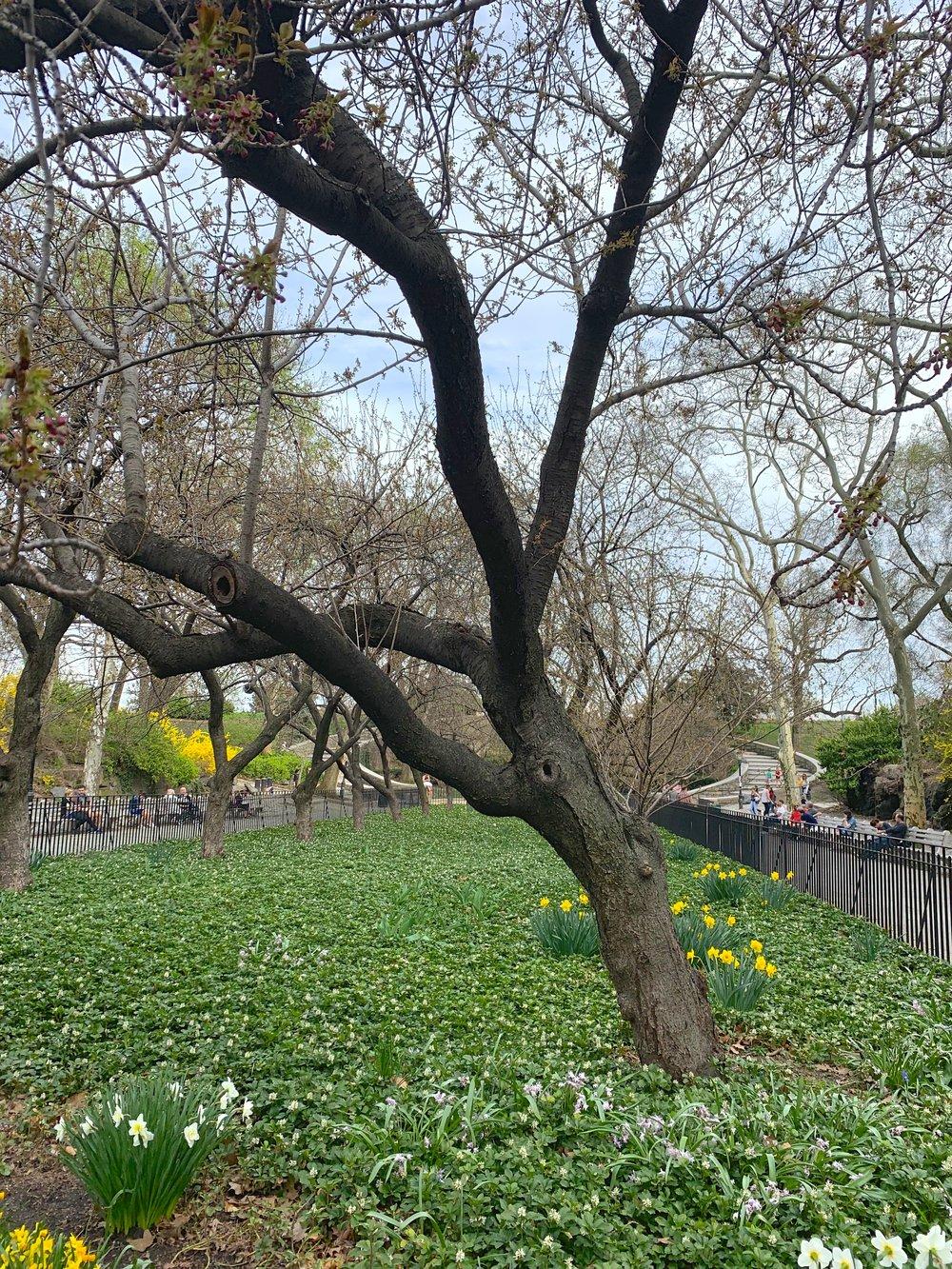 7 Carl Schurz Park in Early Spring.jpg