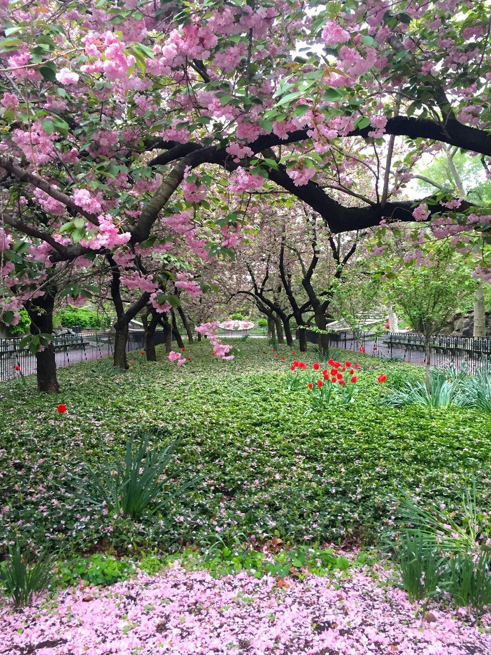 8 Carl Schurz Park in Full Bloom.jpg
