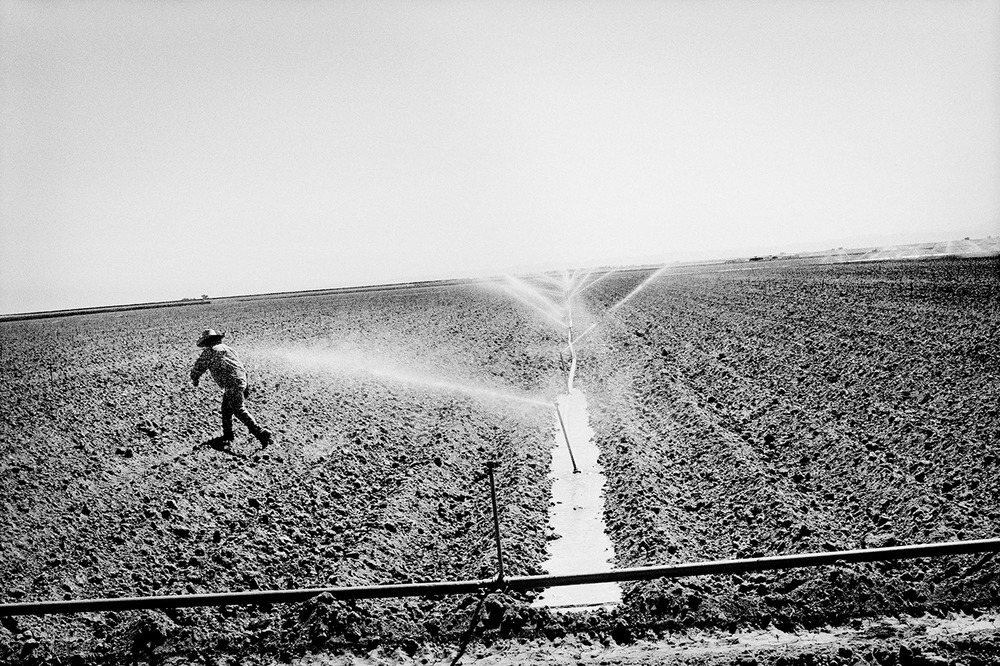 Watering a tomato field. Huron, California. 2010.  Inquire about this image