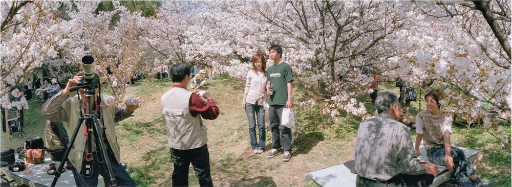 Japan, Kyoto, Cherry blossom, 2012