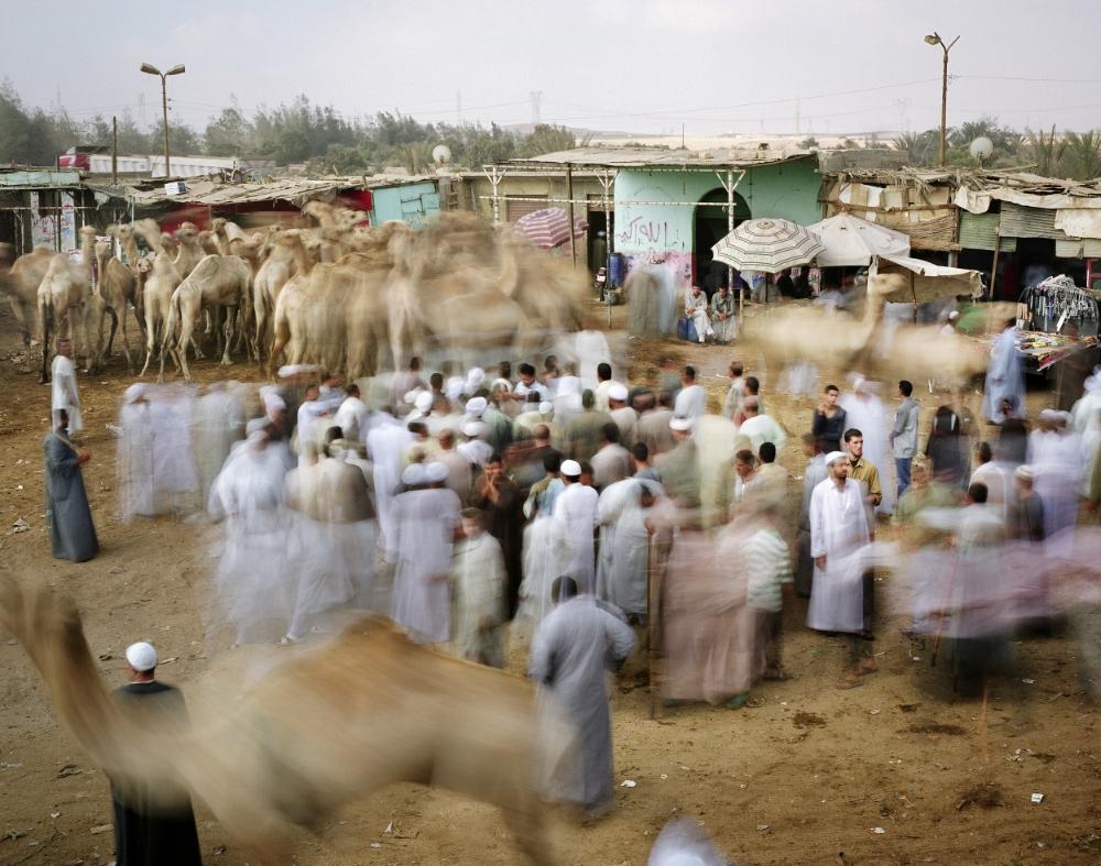 Giza Camel Market, Greater Cairo, Egypt, 2011.