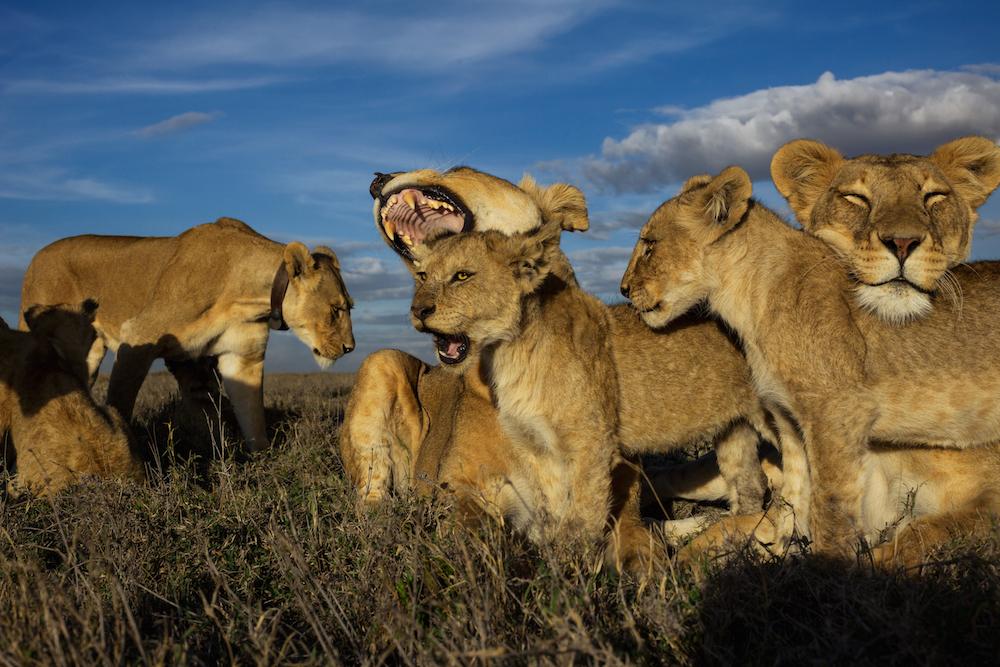 Serengeti National Park, Tanzania, 2011.