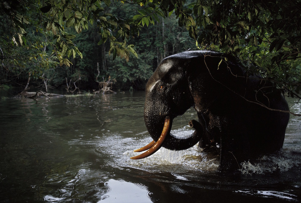 Loango National Park, Gabon, 2003.