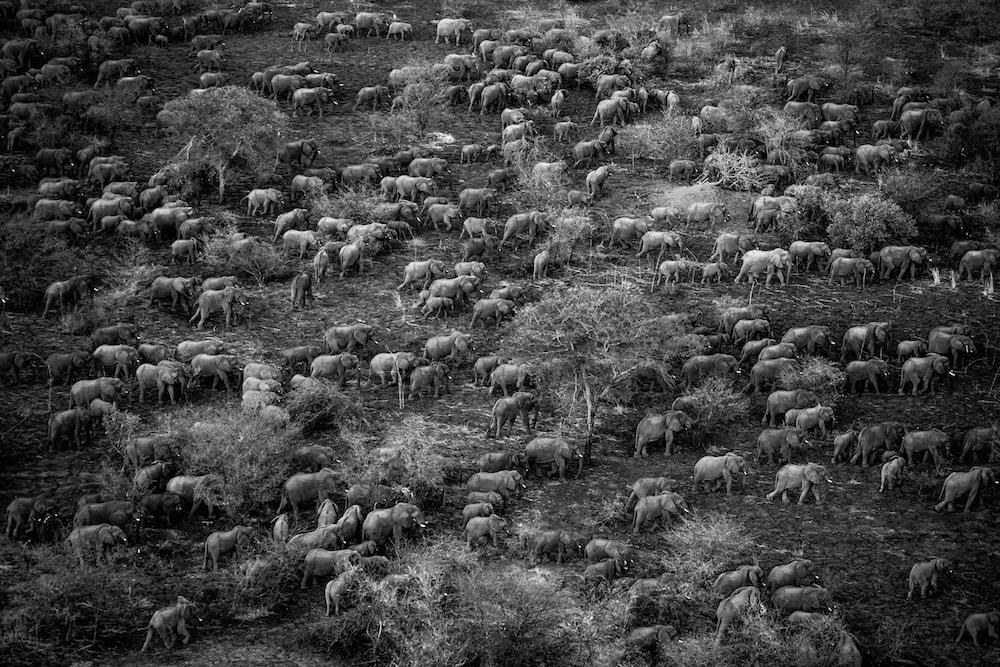 Zakouma National Park, Sarh, Moyen-Chari, Chad, 2006.