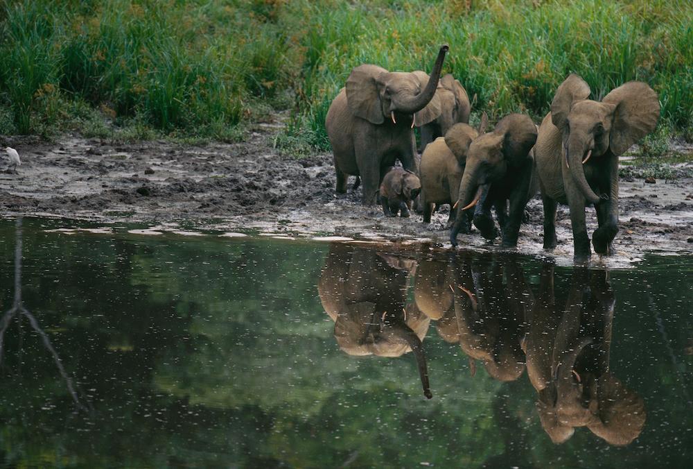 Ivindo National Park, Gabon, 2003.