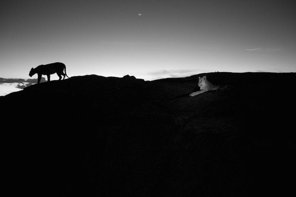 Serengeti National Park, Tanzania, 2012.