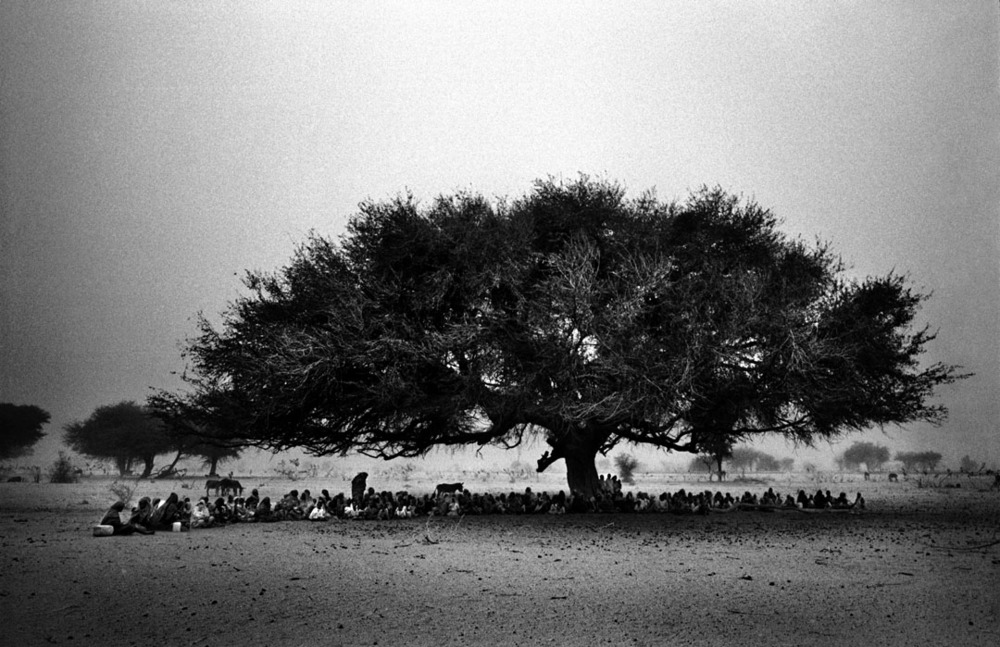 Sudanese displaced take refuge under a tree in Disa, Northern Darfur out of the heat of the day and out of view of the Antanov responsible for the bombing, there are estimated to be 2,000,000 displaced in Darfur who are trapped on the east, west and south by government troops and in the north by the desert wasteland which will certainly claim the lives of their livestock and weaker members of their family. 2004.  Inquire about this image