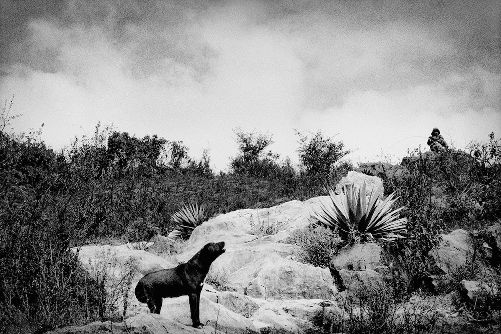 A shepherd's dog in the hills above town. Santiago Mitlatongo, Mexico. 2011.  Inquire about this image