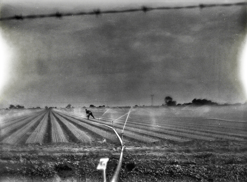 An agricultural laborer tends to an onion field in Sonora Mexico, near the United States border. A majority of the arable land in the region has been purchased or leased by United States based corporate farmers who broker water deals to irrigate their lands. Smaller, privately owned farms cannot compete, as the last of the groundwater supply dries up.  Inquire about this image