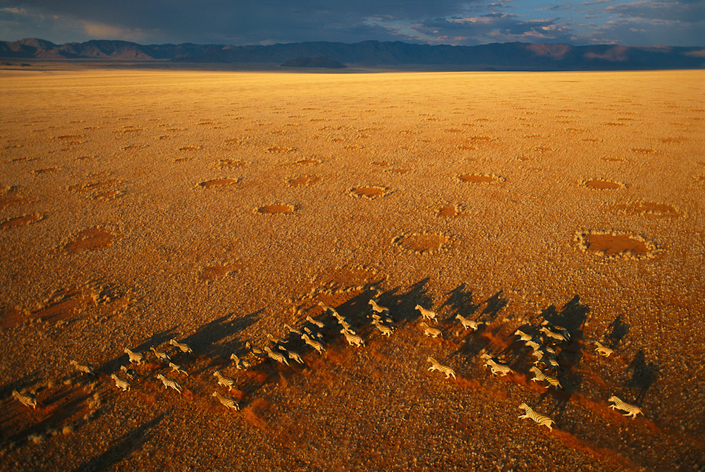 Zebra and Fairy Circles, Namibia, 2004.  Inquire about this image