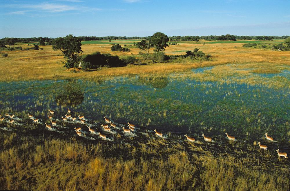 Lechue, Okarango Delta, Botswana, 2004.  Inquire about this image