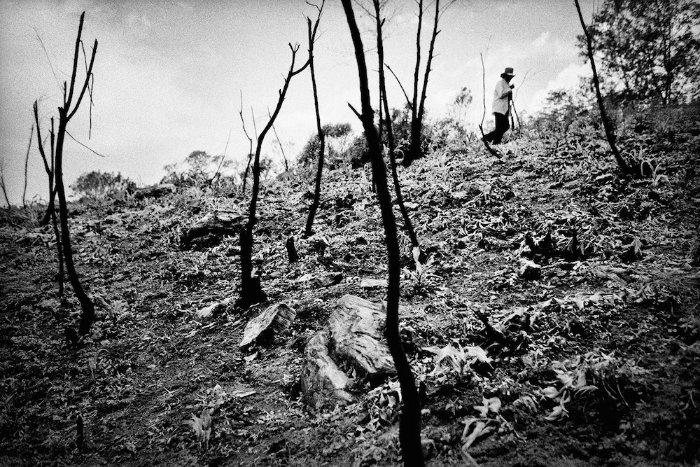A field cleared for planting. San Miguel Cuevas, Mexico. 2000.   Inquire about this image