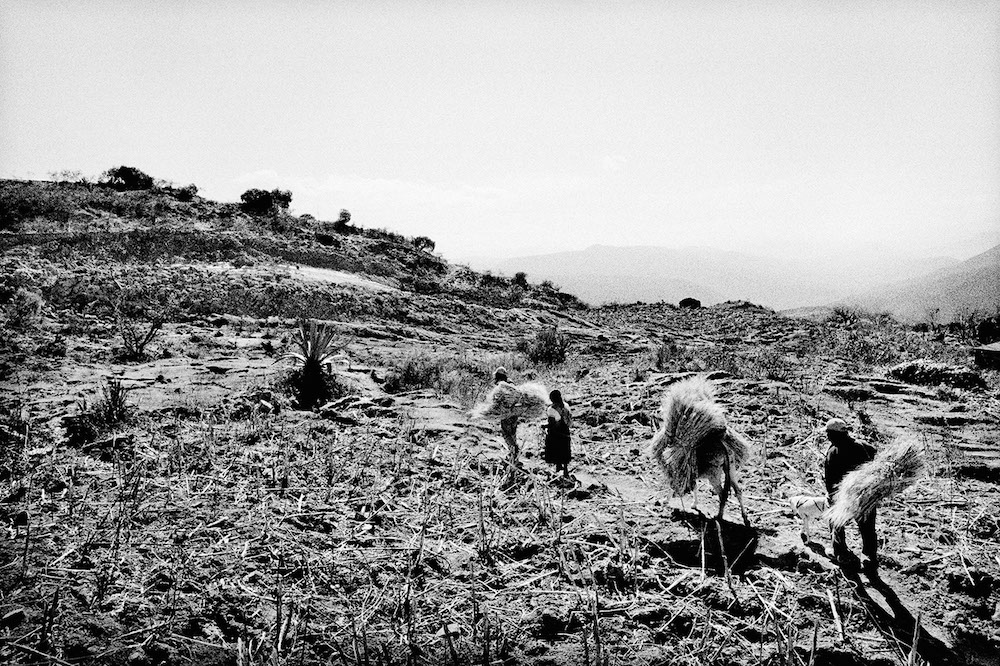 A family carries wheat from ruined land. Santiago Mitlatongo, Mexico. 2012.   Inquire about this image