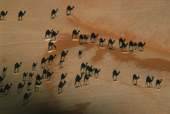 Camel caravan, Wadi Mitan, Oman, 2004.  Inquire about this image