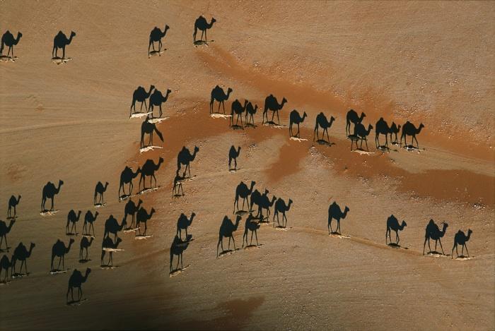 Camel caravan, Wadi Mitan, Oman, 2004.   Inquire about this image