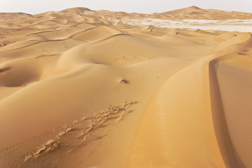 Rheem Gazelles, Umm az-Zamul, United Arab Emirates, 2008.   Inquire about this image