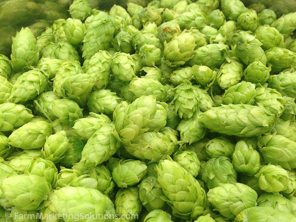 hop farming-2975
