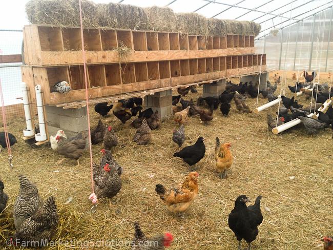 2015 Pasture-Raised Eggs Budget — Farm Marketing Solutions